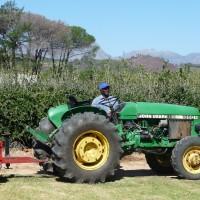 02_Mit dem Traktor geht es in die Plantage hinein.