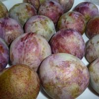 09_Oliven Oder Feigen Nein Das hier sind Pflaumen, und zwar eine der süßesten Sorten, die derzeit auf dem Markt sind. Die Sorte hat den schlichten Namen Green-Red.