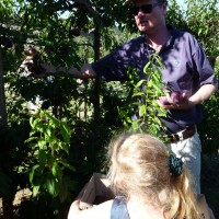 12_Auch du Plessis' sechsjährige Tochter interessiert sich schon für den Pflaumenanbau.